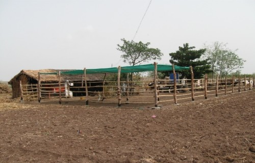 cost effective cow Housing