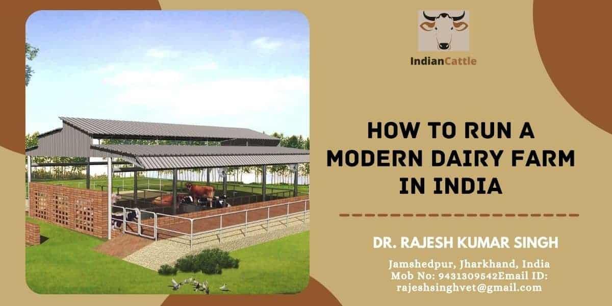 Modern Dairy Farm in India