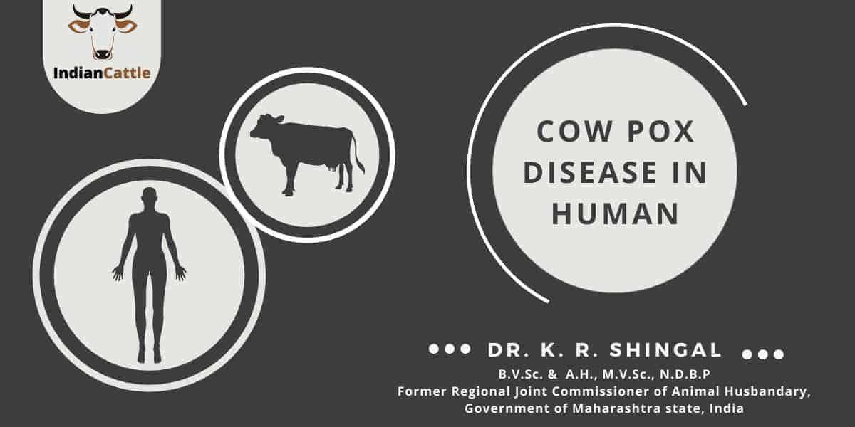 Cowpox Disease