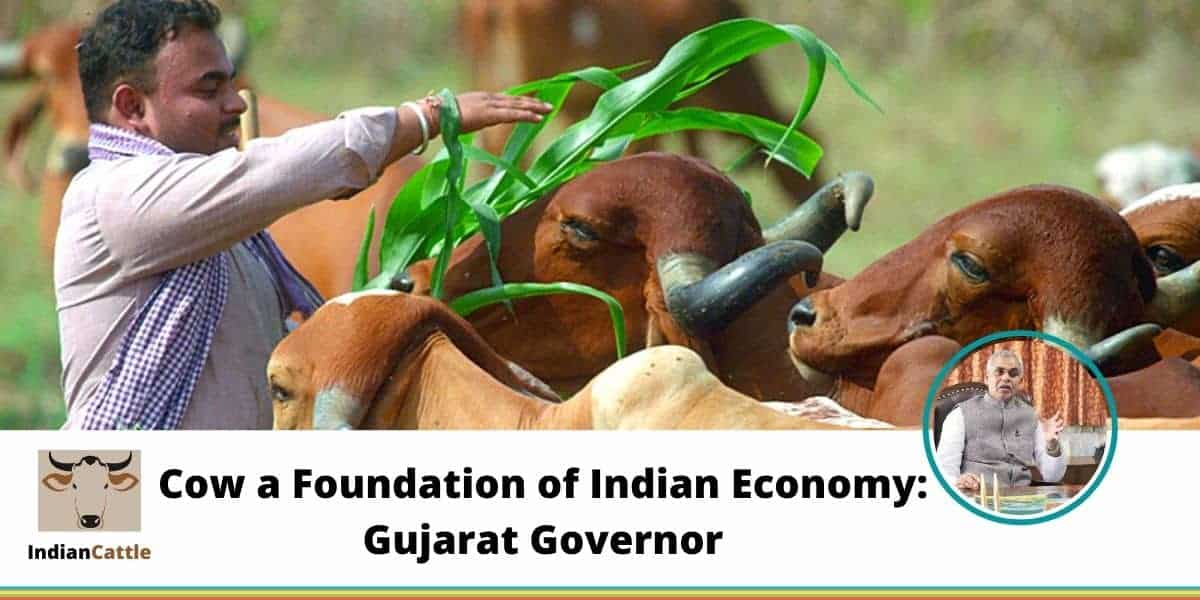 Cow a Foundation of Indian Economy