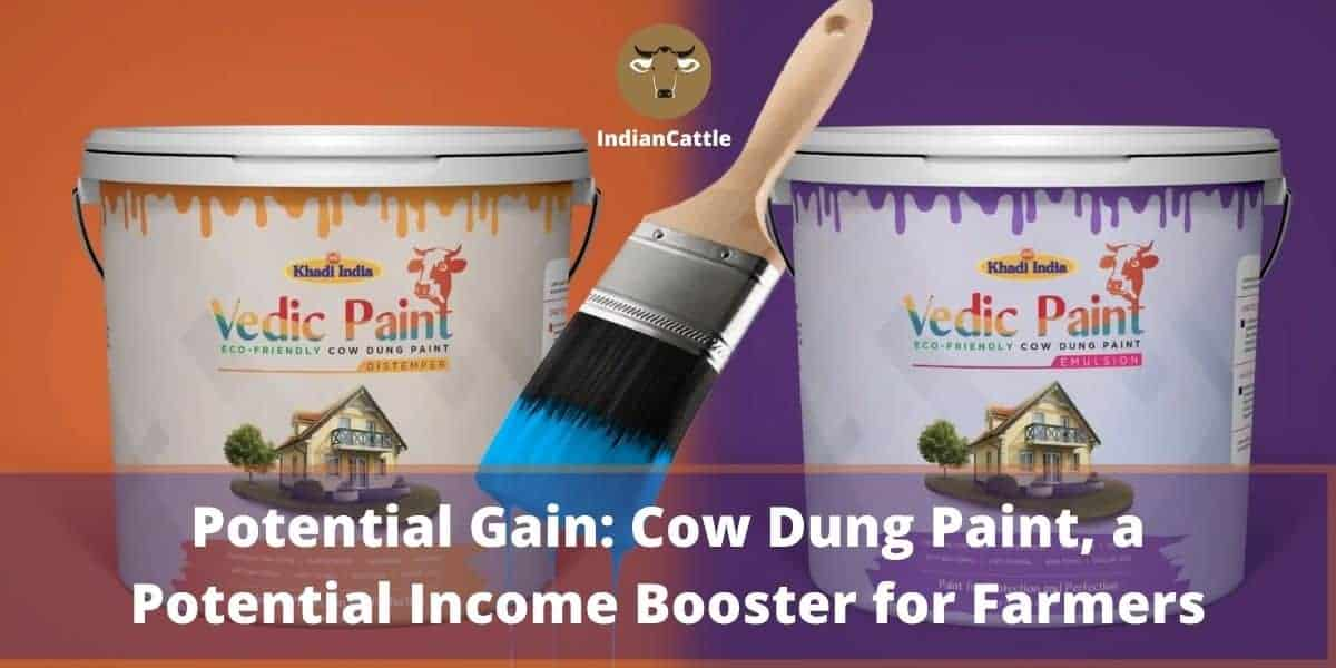 Cow dung paint