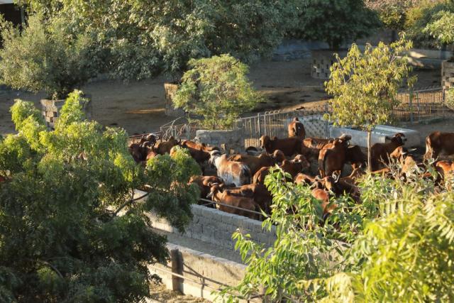 Dairy Herd Performance Improvement