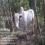 Punganur Bull