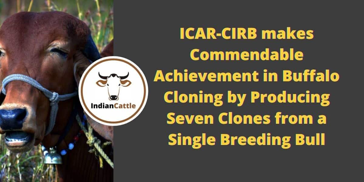 ICAR-CIRB