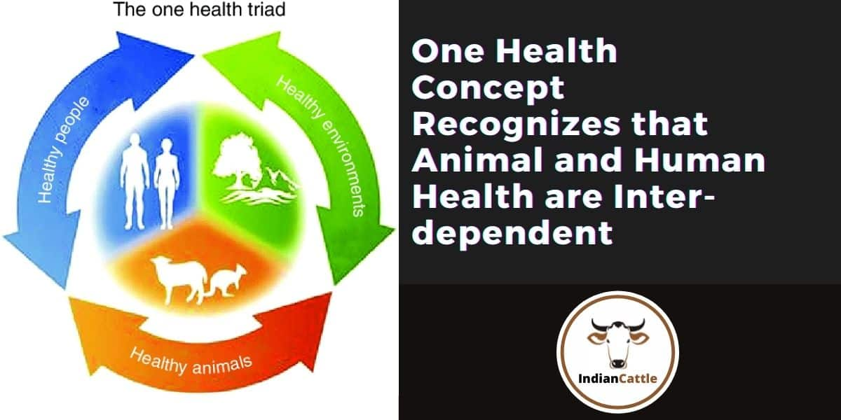 One Healthapproach