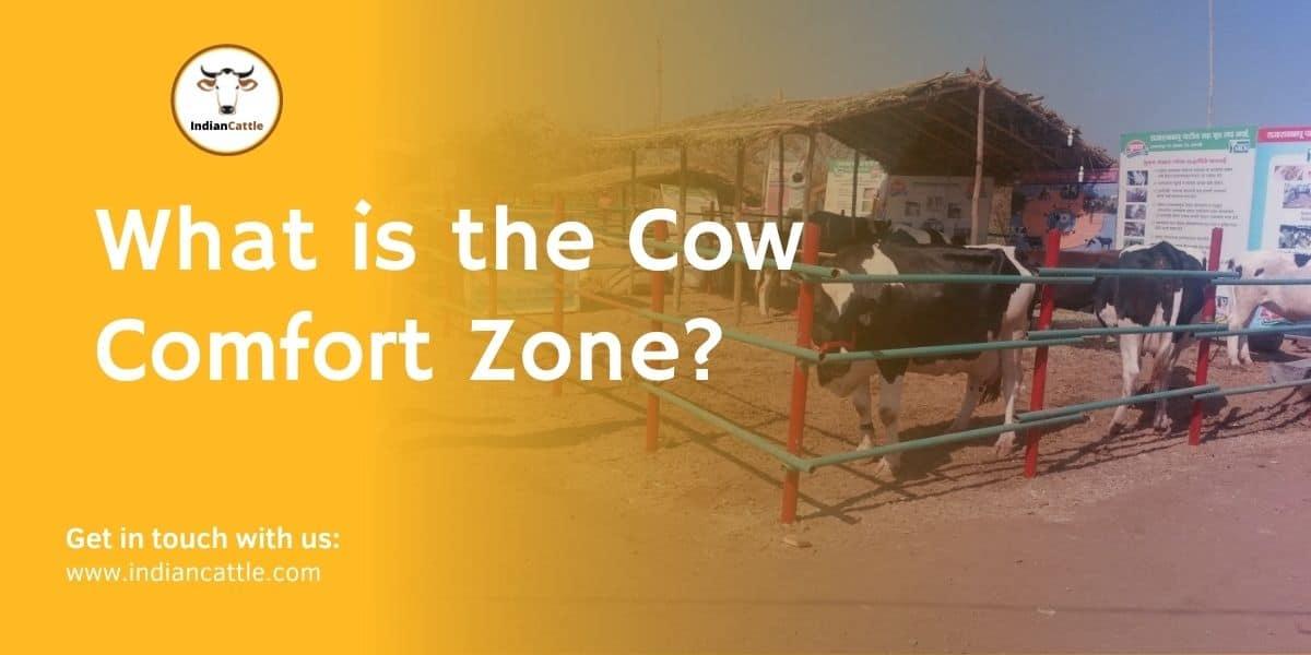 Cow Comfort Zone