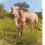 Kabri Cow